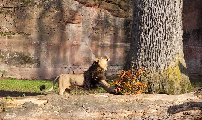Zoológico de Nuremberg